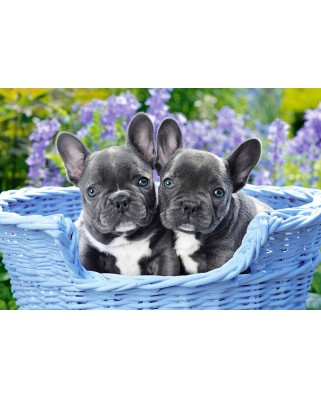 Puzzle Castorland - French Bulldog Puppies, 1000 piese (104246)