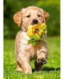 Puzzle Castorland - Puppy with rose, 60 piese