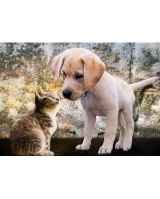 Puzzle Bluebird - Kitten And Puppy, 500 piese (70004)
