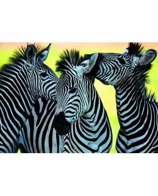 Puzzle Dino - 3 Zebras, 500 piese (62927)
