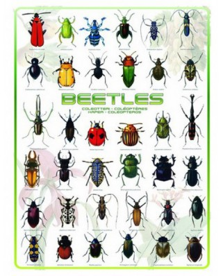 Puzzle Eurographics - Beetles, 1.000 piese (6000-0081)