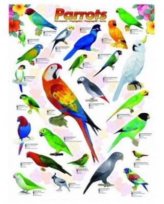 Puzzle Eurographics - Parrots, 1.000 piese (6000-0126)