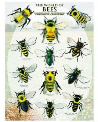 Puzzle Eurographics - Bees Of The World, 1.000 piese (6000-0230)