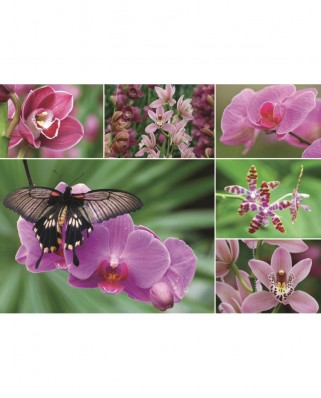 Puzzle Jumbo - Orchids, 1.000 piese (18354)