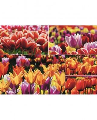 Puzzle Jumbo - Tulips, 1.000 piese (18364)